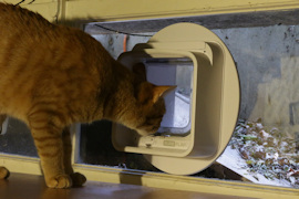 The Surepet connected cat flap, mounted on a window